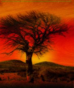 oil pastels | Oil Pastel Tree in Sunset by Winona Sharp in My_Features_Gallery on ...