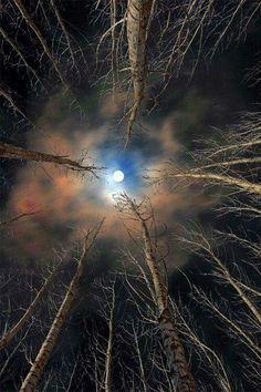 Vollmond über den Bäumen