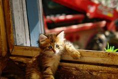 Sevimlilik Kavramını Yepyeni Bir Boyuta Taşıyan 17 Hayvan : NeoTempo