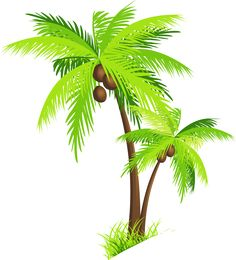Palm Tree with Coconuts PNG Clipart Picture