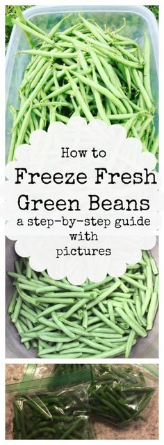With the surplus of green beans in your garden, you have to know how to properly freeze fresh green beans! Frozen green beans are the perfect vegetable for quick side dishes! einfrieren Step-by-Step Guide: Freezing Fresh Green Beans Freeze Fresh Green Beans, Freeze Beans, Frozen Green Beans, Freezing Green Beans, Freezing Fruit, Fresh Green Bean Recipes, How To Freeze Corn, Freezing Onions, Pickled Green Beans