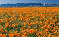 America's Best Road Trips: Antelope Valley