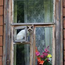 Cat in window by Victor Ostashk