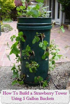 At Living Green And Frugally We Aim To Provide You With Lots Of Great Tips  And Advice On How To Build A Strawberry Tower Using 5 Gallon Buckets