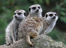 Easy Ways to Save Money on Entertainment and Life's Other Little Luxuries Wentworth Garden Centre, Zoo Animals, Cute Animals, Melbourne Zoo, Community Events, Cute Animal Pictures, Ways To Save Money, Bird Houses, Picture Quotes
