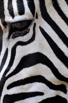 """Black and White Camouflage by Andre Gallant"""