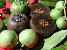 Zapote Fruta Mexicana
