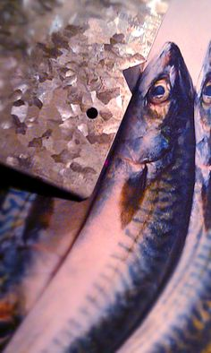 These fish were coaxing the blues from the metal
