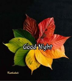 Good Night Cards, Cute Good Night, Good Night Greetings, Good Night Messages, Good Night Wishes, Good Night Sweet Dreams, Good Night Image, Good Night Quotes, Good Night Thoughts