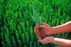 Mil y un árboles  La iniciativa de Mil y un árboles, busca sensibilizar a la juventud en la importancia del cuidado y conservación del medio ambiente por medio de la reforestación sistematizada de 1001 árboles en Zonas en las que se hace necesaria esta Actividad.