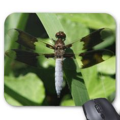 Dragonfly, Mousepad. Mouse Pad