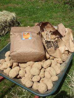 How To Grow Dirt Free Potatoes