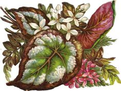 Larger Victorian Die Cut Scrap Florals & Coleus Leaves c1880