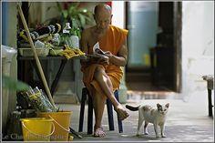 le vieux moine et le chat
