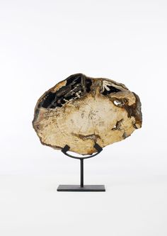 Piece of Petrified Wood on a Stand http://www.kiama-art.com