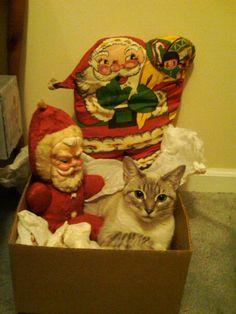 Cat in the Santa Box