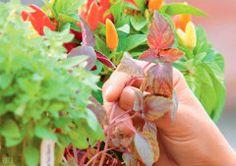 9 ervas para cultivar em casa e usar como tempero