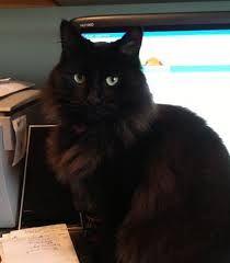 Afbeeldingsresultaat voor ozzy cat