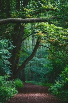 Forest and nature Beautiful Forest, Beautiful World, Beautiful Places, Forest Path, Tree Forest, Forest Road, Nature Living, Terre Nature, Walk In The Woods