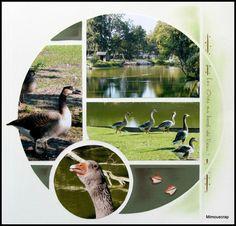 Mise en page simple 4 photos