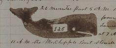 Whaling Log illlustration