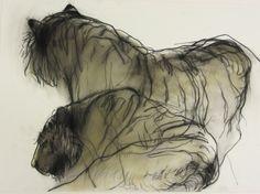 Tigers...Jan Van Der Kooi