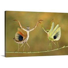 "Canvas On Demand Show Time by Hasan Baglar Photographic Print on Canvas Size: 24"" H x 36"" W x 1.25"" D"