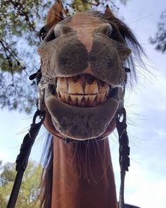 say cheese ;-))))) funny horse smiling - Horses Funny - Funny Horse Meme - - say cheese ;-))))) funny horse smiling The post say cheese ;-))))) funny horse smiling appeared first on Gag Dad. Horse Smiling, Smiling Animals, Happy Animals, Cute Funny Animals, Cute Baby Animals, Animals And Pets, Funny Horses, Cute Horses, Pretty Horses