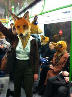 Urban foxes travel in style