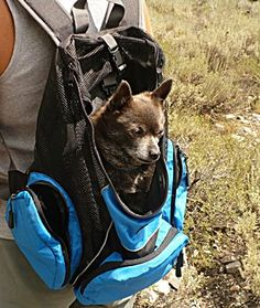 Best Pet Carriers for Dogs up to 30 lbs http://www ...