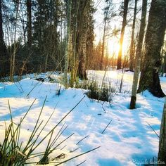 """57 tykkäystä, 0 kommenttia - Kappale luontoa ∆ Luontoblogi (@kappaleluontoa) Instagramissa: """"#kangaskorte #equisetumhyemale #jäätäjaaurinkoa #iceandsun #jäinentie #icyroads #luontokuvaus…"""" Snow, Outdoor, Instagram, Outdoors, Outdoor Games, The Great Outdoors, Eyes, Let It Snow"""