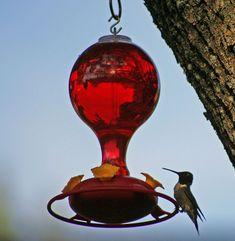 The Perfect Hummingbird Food Recipe