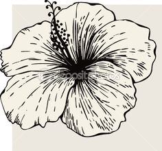 1000 ideas about hibiscus drawing on pinterest dragonfly