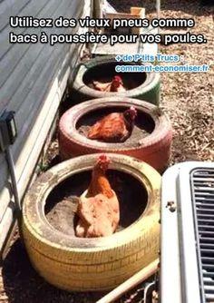 Est-ce que vos poules ont un bac à poussière ? C'est essentiel pour elles, car cela les débarrasse des parasites ! L'astuce est d'utiliser des vieux pneus comme bac à poussière pour les poules. Regardez :  Découvrez l'astuce ici : http://www.comment-economiser.fr/utilisez-des-vieux-pneus-comme-bacs-a-poussiere-pour-poules.html?utm_content=buffer13390&utm_medium=social&utm_source=pinterest.com&utm_campaign=buffer