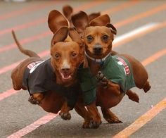 Racing until the very end.  My dog Dobie would try to trip them all so he could win.