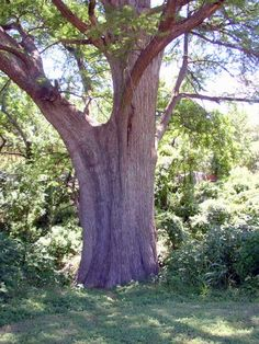 Wait until you see what this tree trunk becomes, it will blow you away!!!!!!!!!!!!!!!!!!!!!