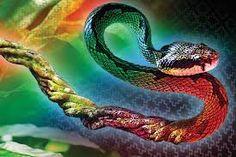 Ayahuasca snake
