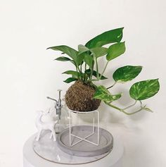 I've always been fond of plants in my home, I feel like they make the space feel more calming and give off a great vibe. But not all house plants are created equal. Some are meant to just sit pretty, while others are hard at work removing multiple toxins and purifying your home's air. Cool, right!? You may already have a few of these purifying plants in your home because of their unique look and easy-to-care-for persona. And some of these plants are right on trend, if trendy house plants are…