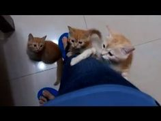 Kittens Use Human Ladder To Get Food... That's A LOT of cats!