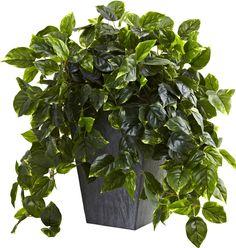 Hanging Pothos Desk Top Plant with Slate Planter