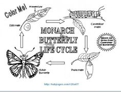 ways to help monarchs and lots of good info