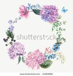 Summer Vintage Floral Greeting Wreath with Blooming Hydrangea and garden flowers, botanical natural hydrangea Illustration on white in watercolor style.