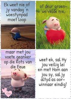 Good Morning Messages, Good Morning Wishes, Good Morning Quotes, Boss Wallpaper, Pig Wallpaper, Good Morning Rainy Day, Cute Piglets, Afrikaanse Quotes, Goeie More