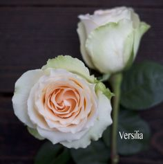 Royal Flowers, Versilia Peach Rose