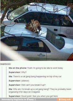 Hahahahahaha oh cats