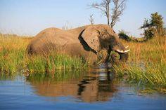 Südliches Afrika – Peter Brugger / Kneissl Touristik Sa, 11. Nov., 12:15 - 12:45   Weltweit.Reisen Elephant, Adventure, Animals, Tour Operator, Africa, World, Travel, Animales, Animaux