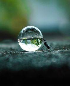 Ant Pushing A Water Droplet By Rakesh Rocky