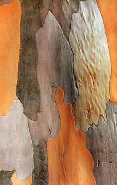 Tree Bark Pattern http://johnpirilloauthor.blogspot.com/