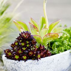 This pot of sculptural succulents creates a dramatic focal point, yet takes just moments to pull together.