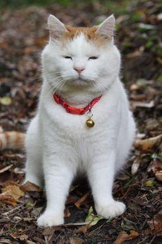 おすわり Hey kitty - your eyes are open!!